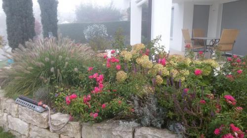 Pflanzung an Mauer 2