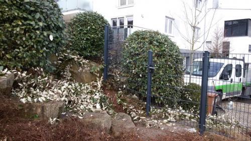 Rückschnitt Gartenpflege